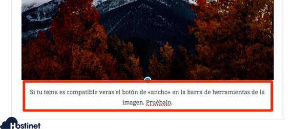 theme compatible ancho gutenberg WordPress