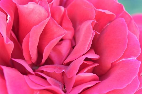 dominios .pink