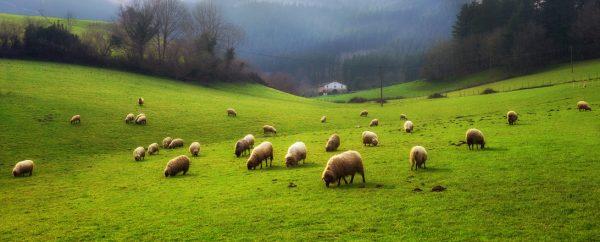 Euskadi Montes imagen comprada
